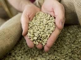 Green coffee def