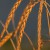 Caratterizzazione chimica e analisi sensoriale della pasta ottenuta dal farro