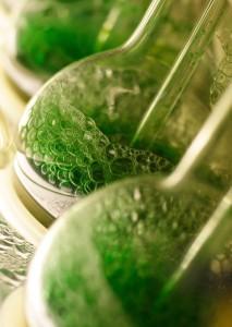 cyanobacteriae cultivation